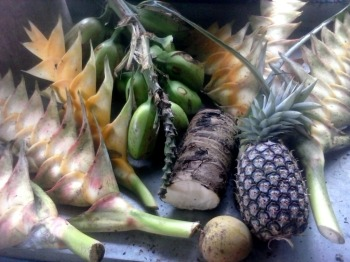 Produce from today, clockwise: Pineapple, Mango, Tauaga Flowers, Fai Samoa (bananas) and Taamu [centre]